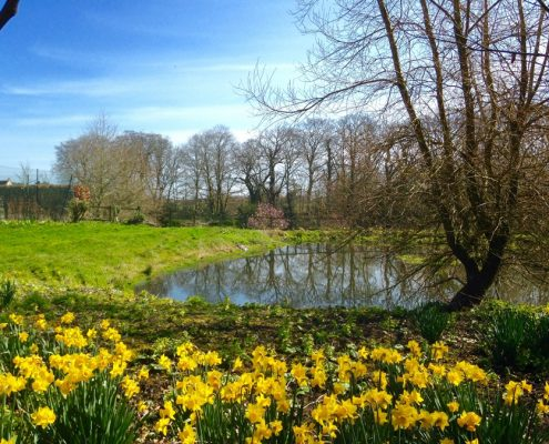 daffs and pond,Swafield Hall